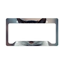 Portrait of blue eyed cat License Plate Holder