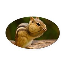 Chipmunk Oval Car Magnet