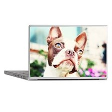 Close up of red Boston terrier Laptop Skins