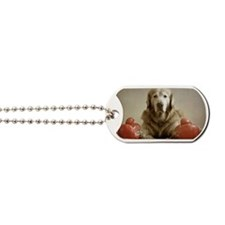 Elderly golden retriever wearing boxer gl Dog Tags