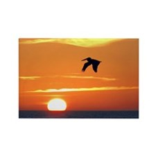 Pelican flying into orange sunset Rectangle Magnet
