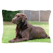 Chocolate Labrador Pillow Case