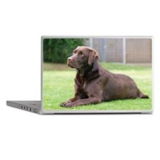 Chocolate Labrador Laptop Skins