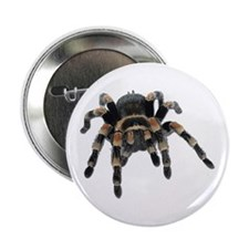 Tarantula Photo Button