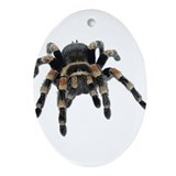 Tarantula Photo Oval Ornament