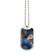 Secret squirrel with bokeh background Dog Tags