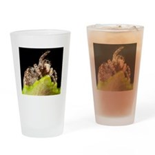 Jumping spider Drinking Glass
