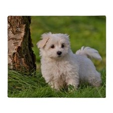 White Havanese pup Throw Blanket