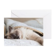Sacred birman cat sleeping under bla Greeting Card