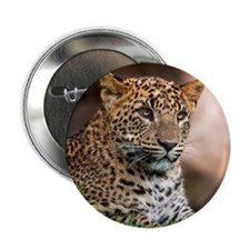 """Leopard siting 2.25"""" Button"""