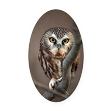 Wild Northern Saw-Whet owl Oval Car Magnet