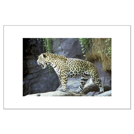 Jaguar Large Poster