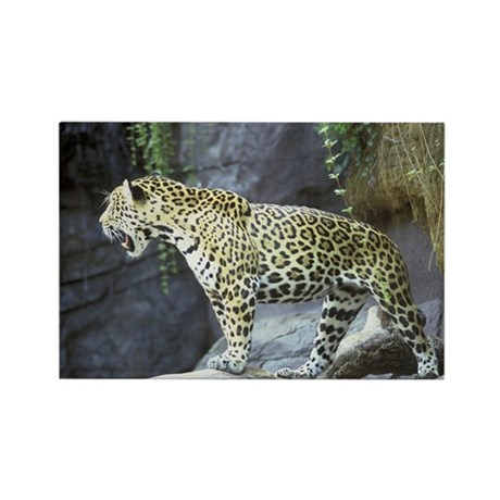Jaguar Rectangle Magnet (10 pack)