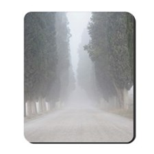 Cypress Pines in the fog, Free PC RF Mousepad