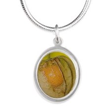 Physalis alkekengi Silver Oval Necklace