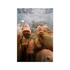 Fish in tank Rectangle Magnet