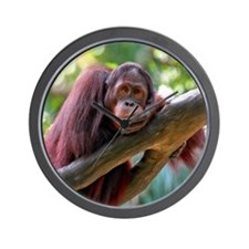 Singapore Zoo - Orang Utan Wall Clock