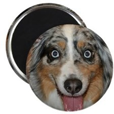 Miniature Aussie dog Magnet