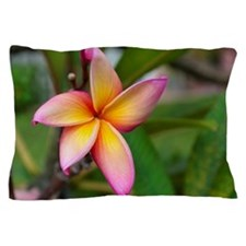 Plumeria Pillow Case