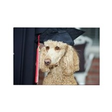Poodle wearing graduation cap Rectangle Magnet