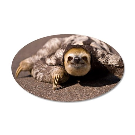 Close-up of three-toed sloth 35x21 Oval Wall Decal