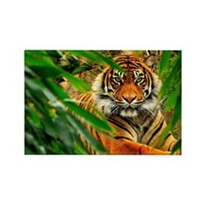 Bengala tiger Rectangle Magnet