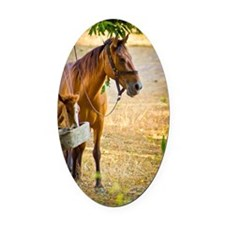 Mother horse and baby horse Oval Car Magnet