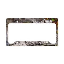 Snow leopards License Plate Holder
