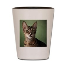 Close-up of cat Shot Glass