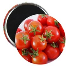 Studio shot of tomatoes Magnet