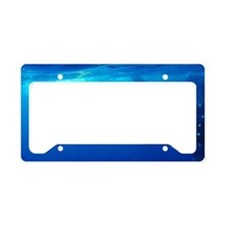 Whaleshark Magic License Plate Holder