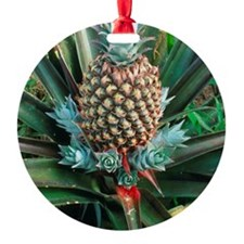 Pineapple plant with fruit Ornament