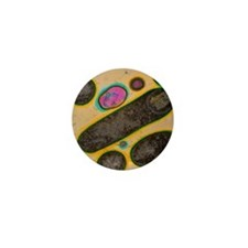Clostridium bacteria Mini Button