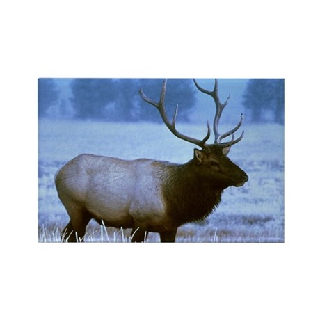 Bull Elk Rectangle Magnet (100 pack)