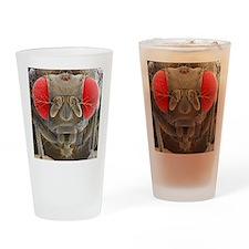 Fruit fly, SEM Drinking Glass
