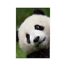 Panda Cub Rectangle Magnet