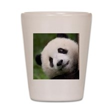 Panda Cub Shot Glass