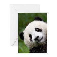 Panda Cub Greeting Card