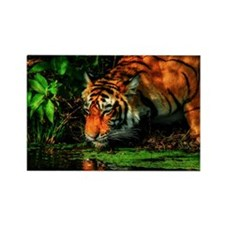 Tiger Reflection Rectangle Magnet