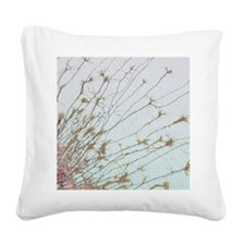 Nerve cell culture, SEM Square Canvas Pillow
