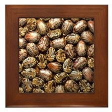 Seeds of the castor oil plant Framed Tile