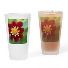 Dahlia 'Mary Eveline' Drinking Glass