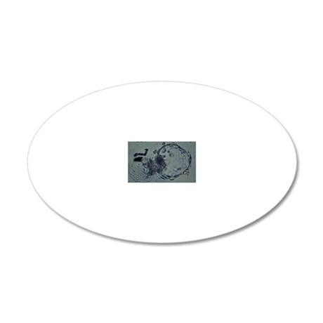 LM of hatching blastocyst in 20x12 Oval Wall Decal