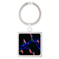 Neuromuscular synapse, light micro Square Keychain