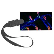 Neuromuscular synapse, light mic Luggage Tag