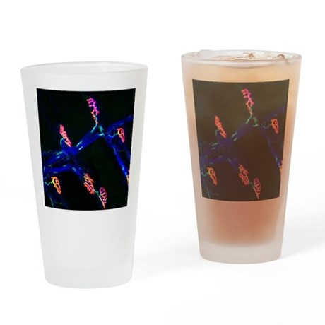 Neuromuscular synapse, light microg Drinking Glass