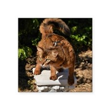 "wild Somali cat Square Sticker 3"" x 3"""