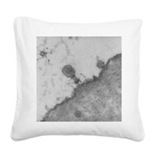 TEM of T4 bacteriophage infec Square Canvas Pillow
