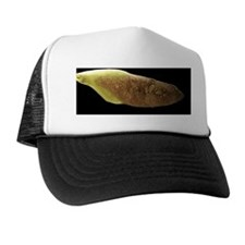 Tooth decay, SEM Trucker Hat