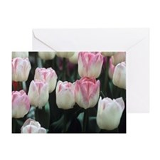 Tulipa 'Meissner Porzellan' flowers Greeting Card